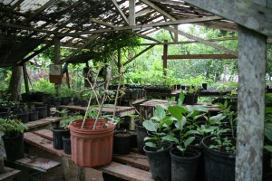 Punta Mona has become one of Costa Rica's best known organic farms