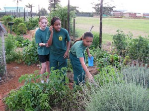 Permaculture at a Botanic Garden in Durban, South Africa